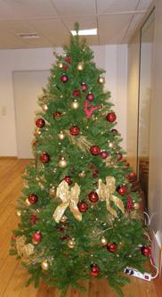 Type Kerstbomen | Kerstboom types