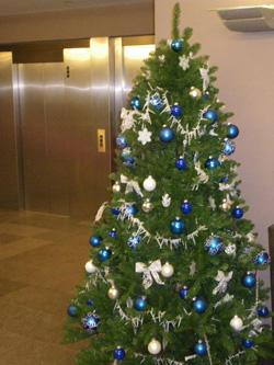 Type Kerstbomen   Kerstboom types